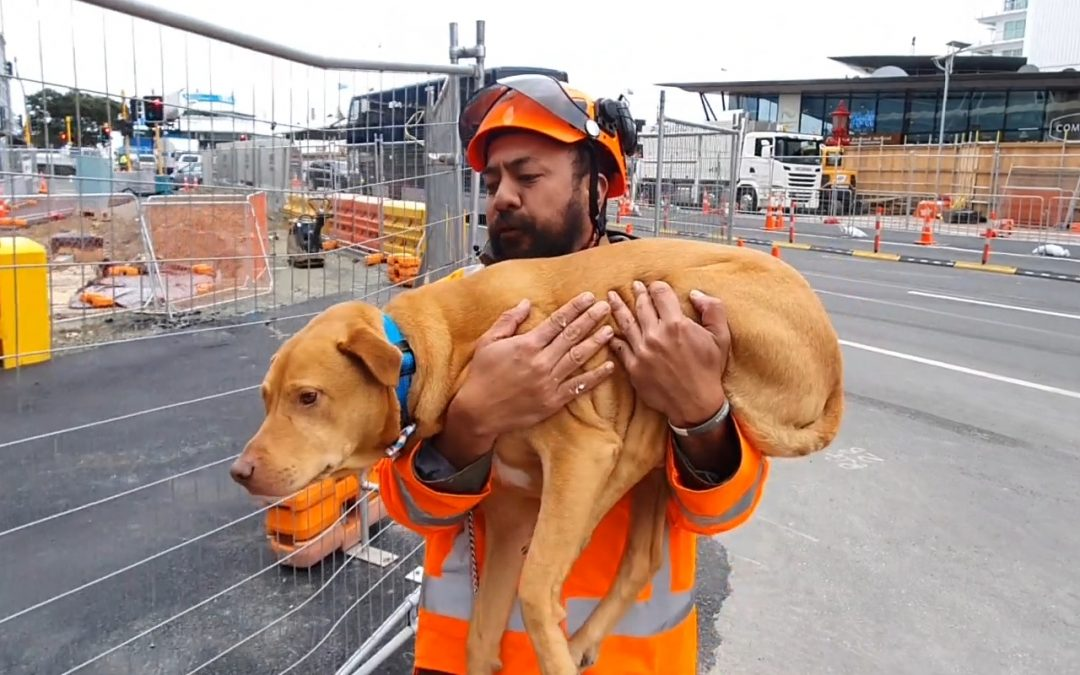 Save Them With Kindness: The New NZTA Training and Competency Model